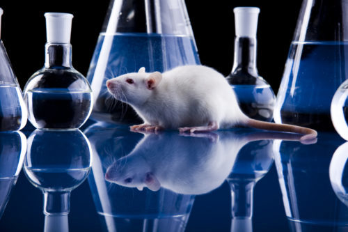 Animal model research for biomedical, preclinical, and drug discovery research.